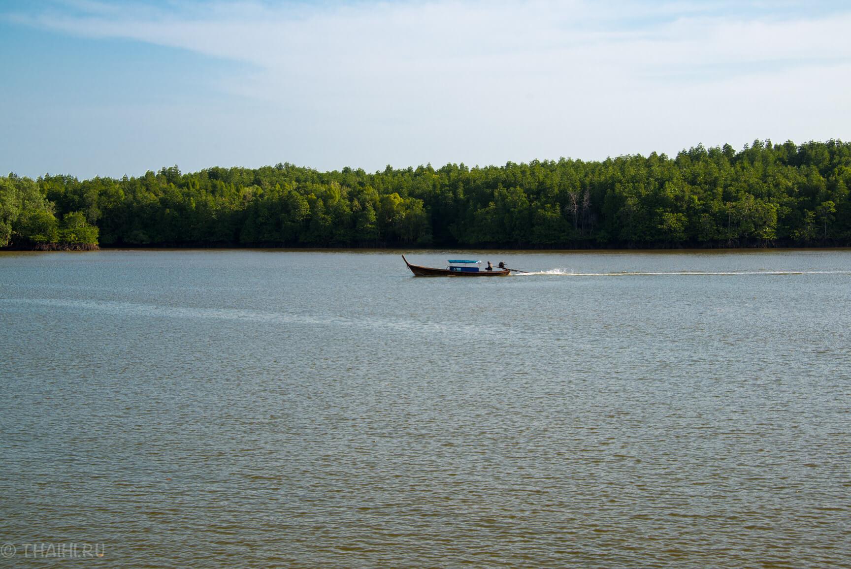 Заросли мангровых деревьев на реке