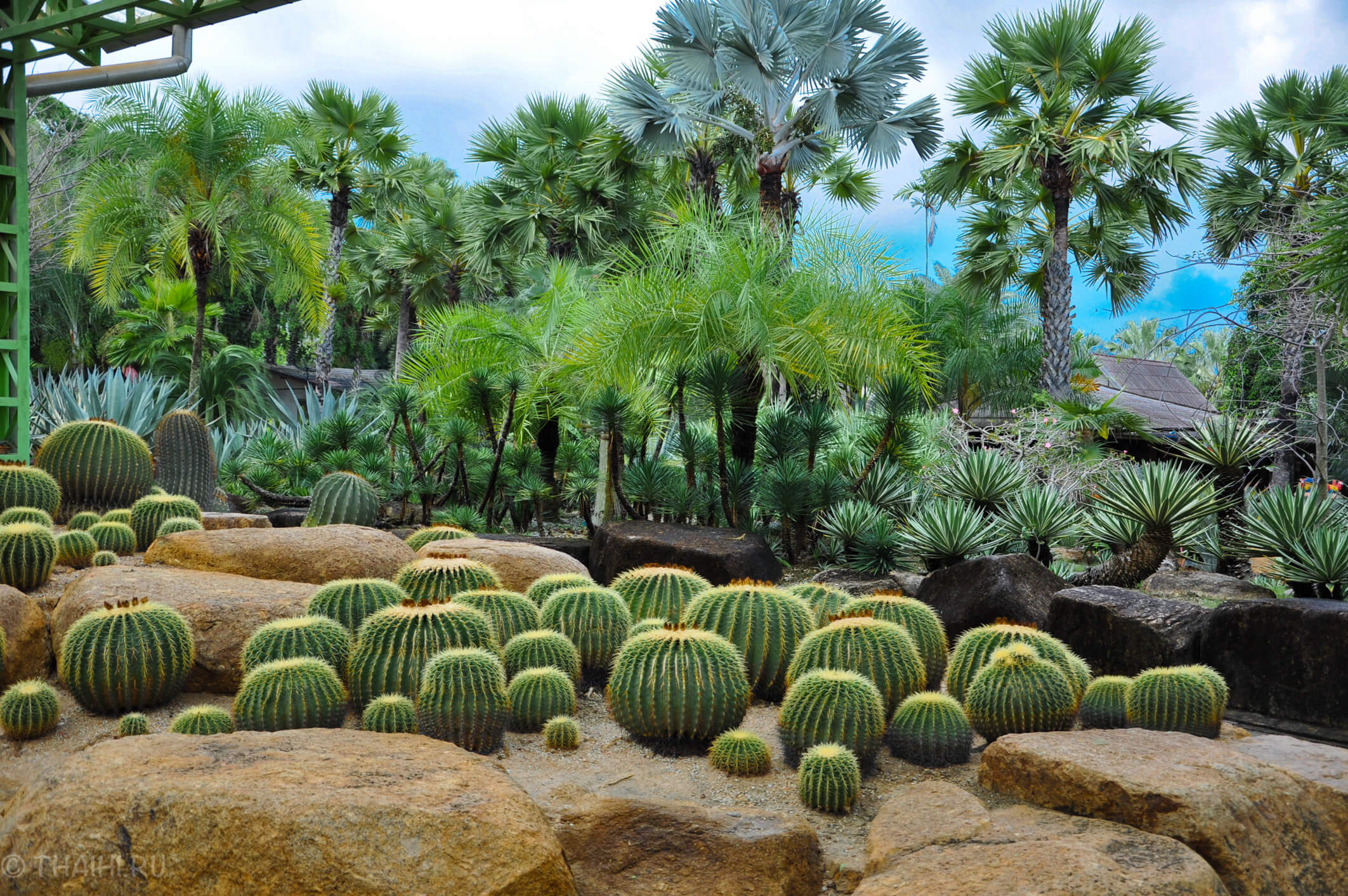 Поляна кактусов в саду Nong Nooch