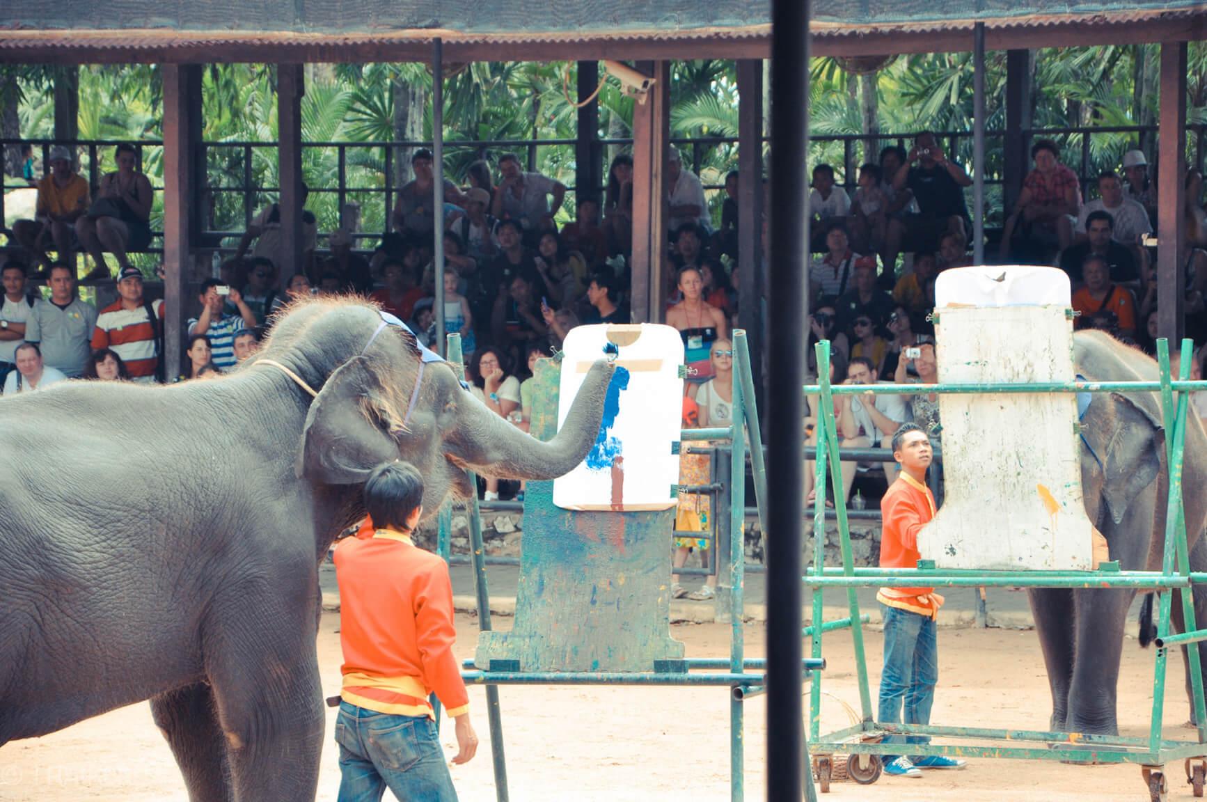 В Нонг Нуч слоны рисуют на футболках