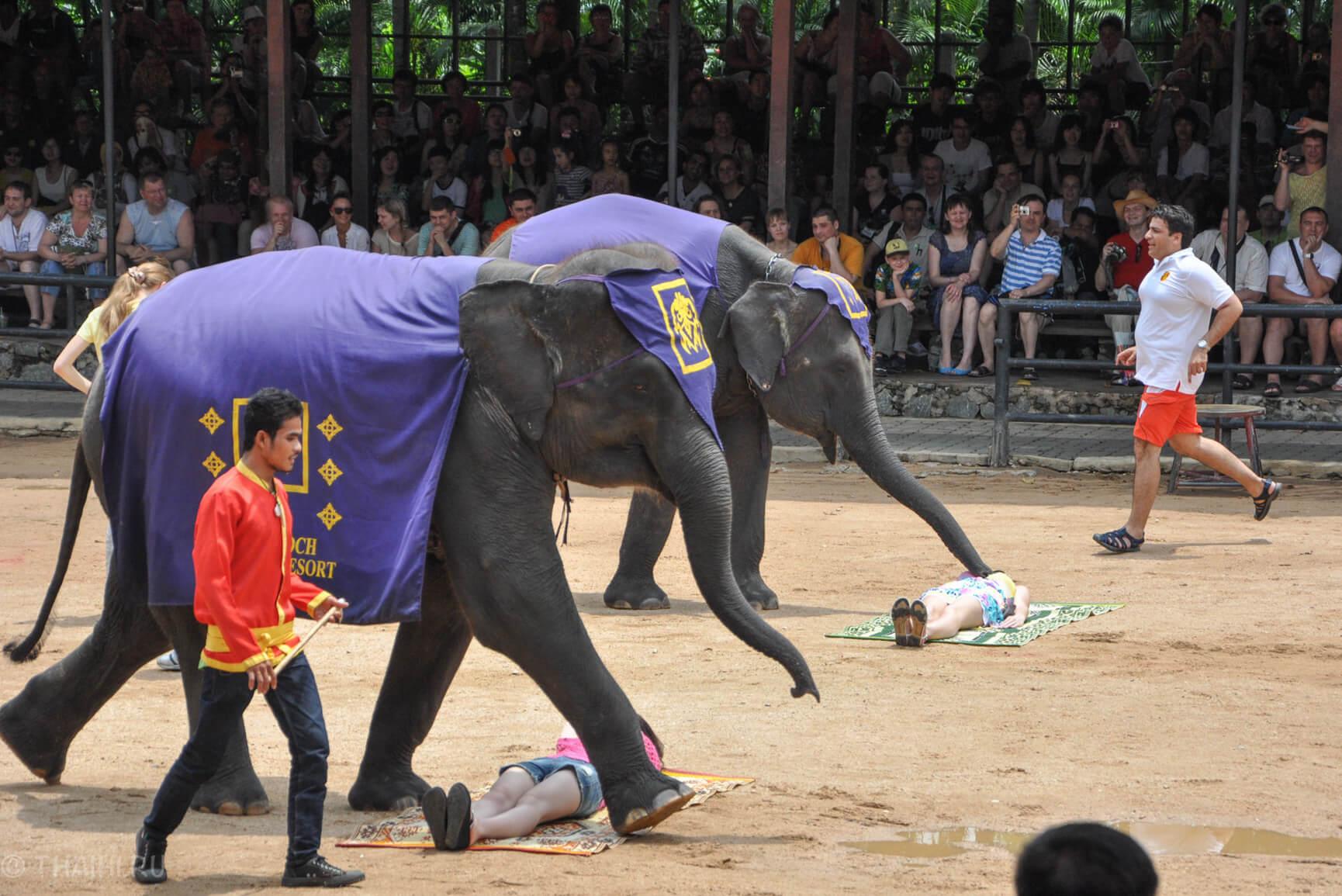 Слоны делают массаж в парке Nong Nooch