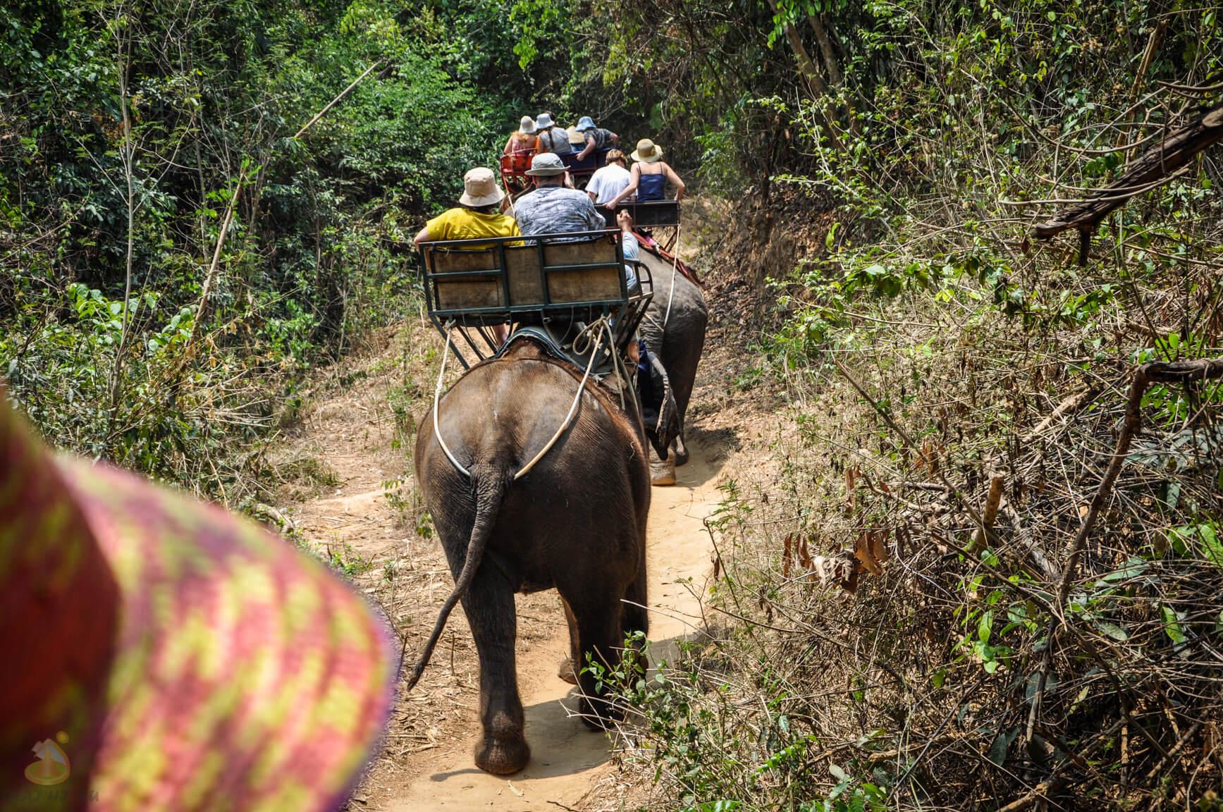 Катание на слонах в деревне