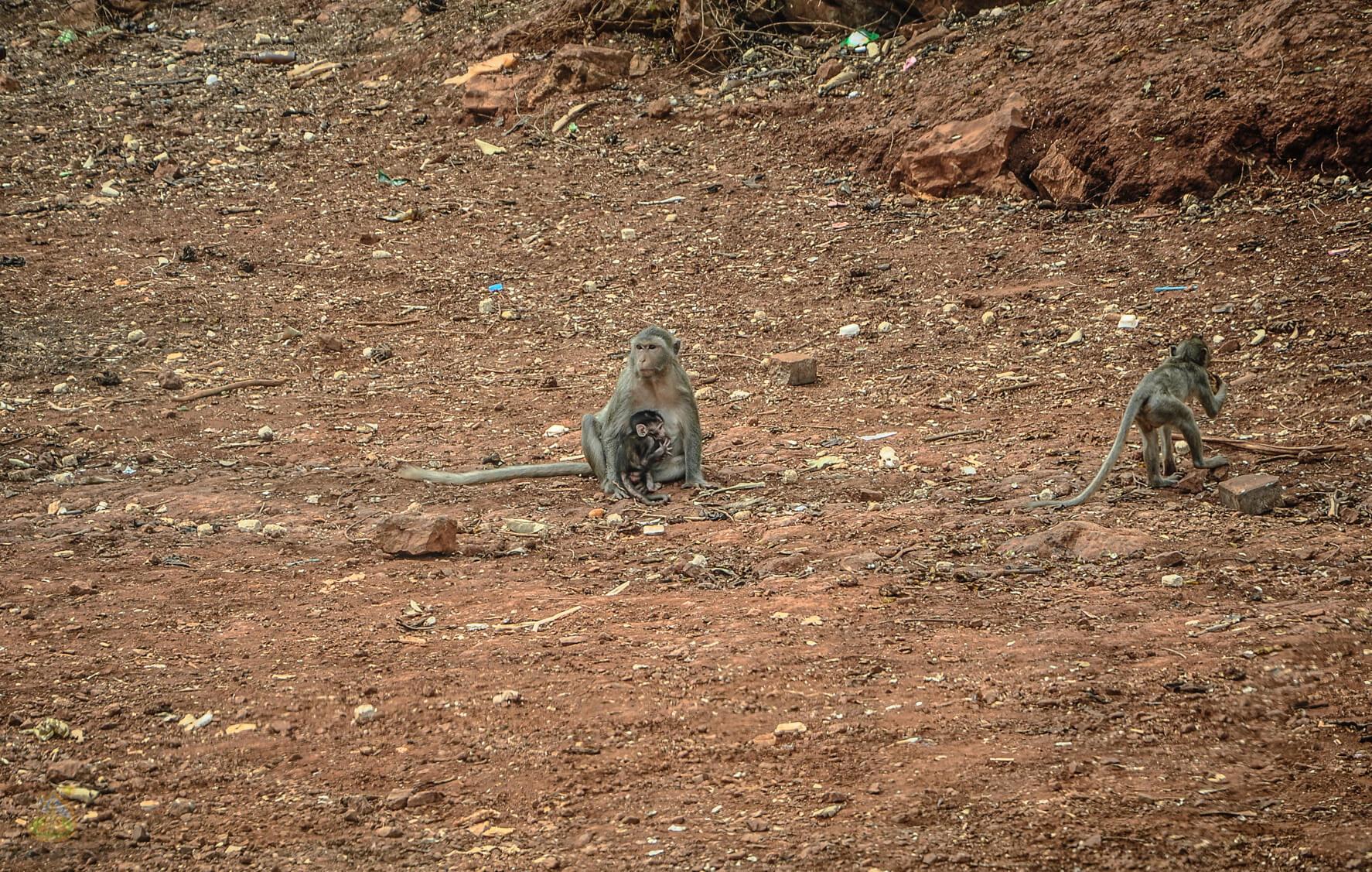 Голодные обезьянки