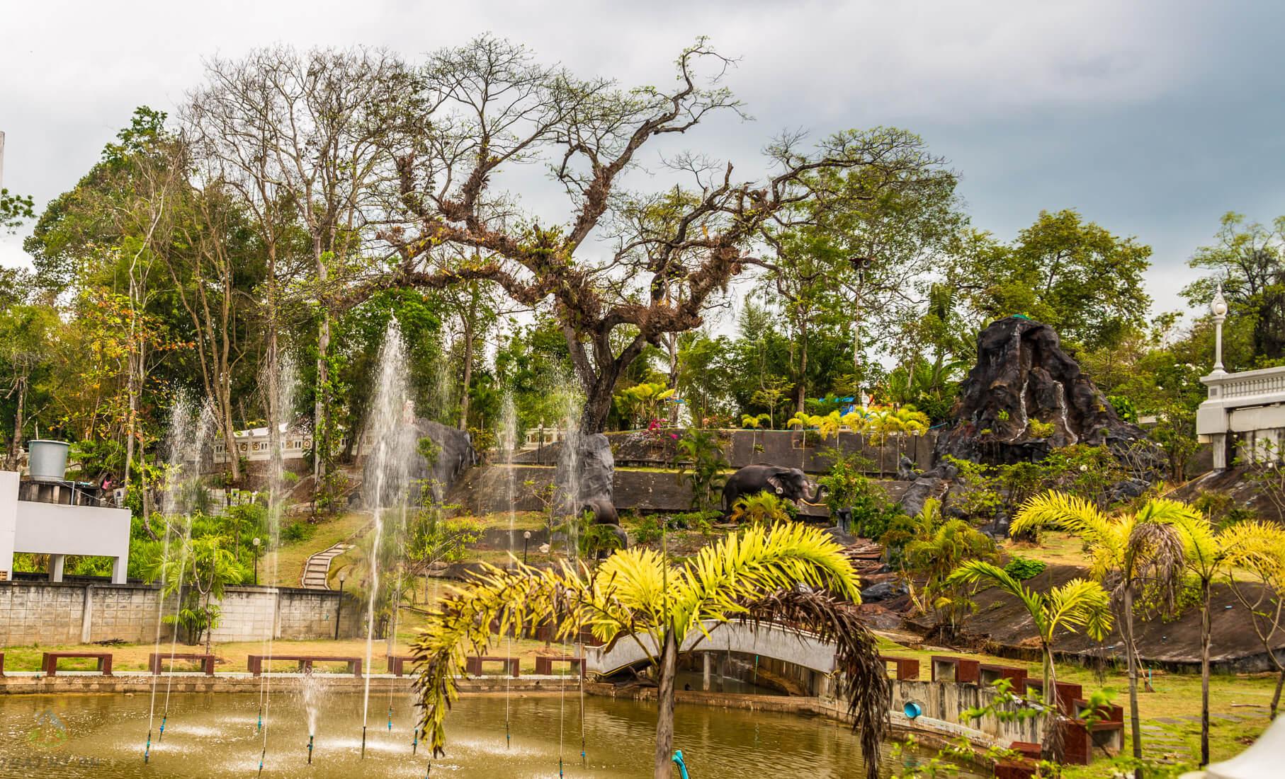 Дерево у Белого Храма в Краби