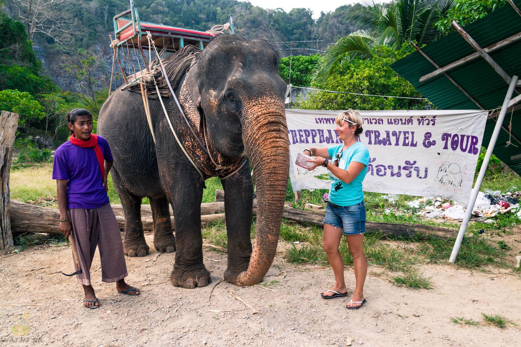 Фото слона в джунглях Тайланда