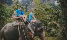 Слоны в джунглях Краби