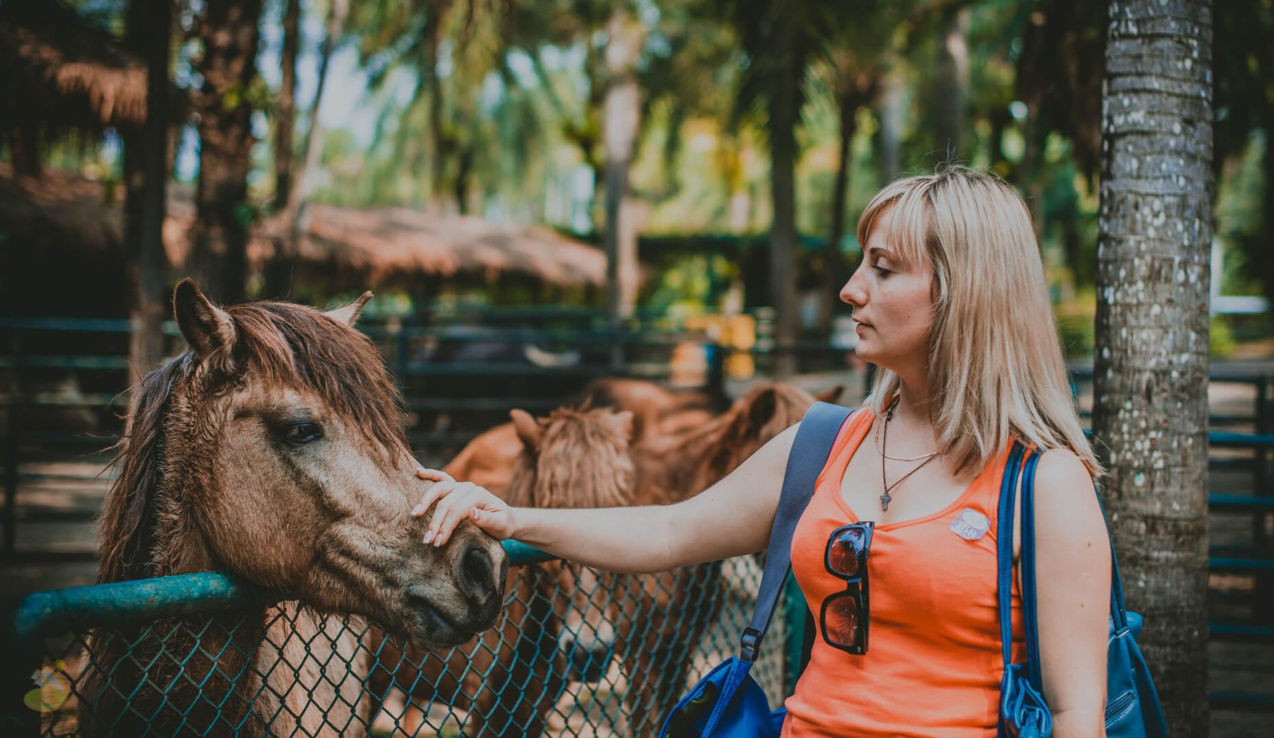 Лошадки в парке Nong Nooch