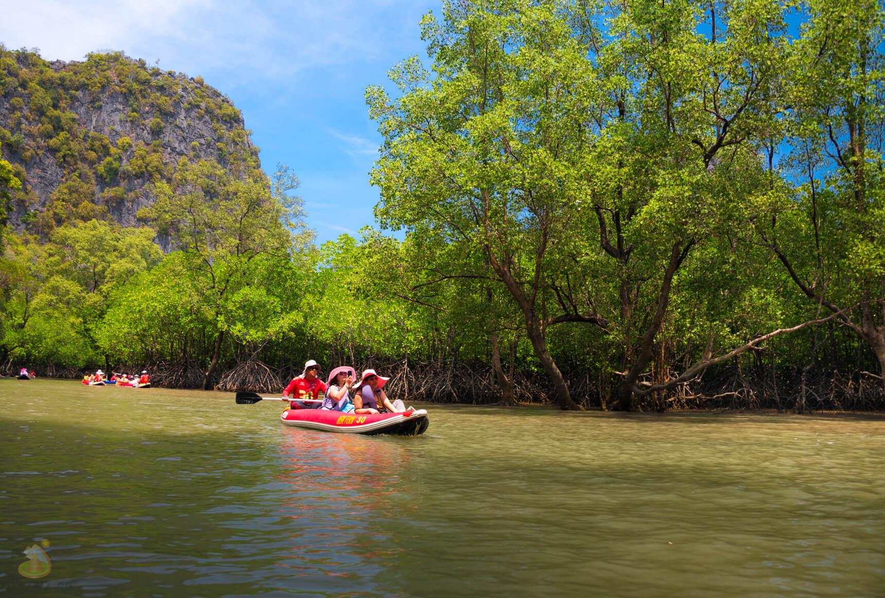 На каноэ в мангровых зарослях
