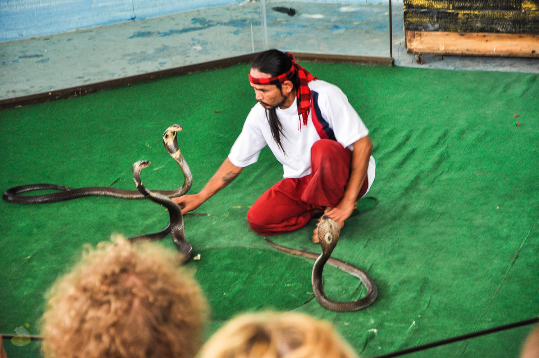 Змеиное шоу в Паттайе - фото