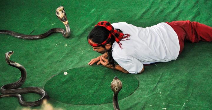 Шоу со змеями в Паттайя, Таиланд