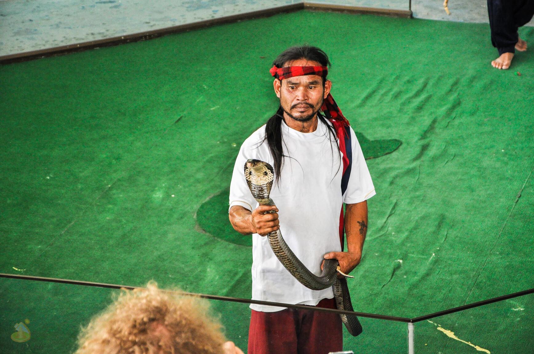 Кобры - шоу со змеями в Паттайя