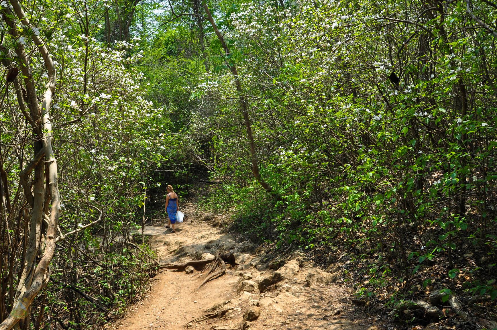 Джунгли в парке Эраван