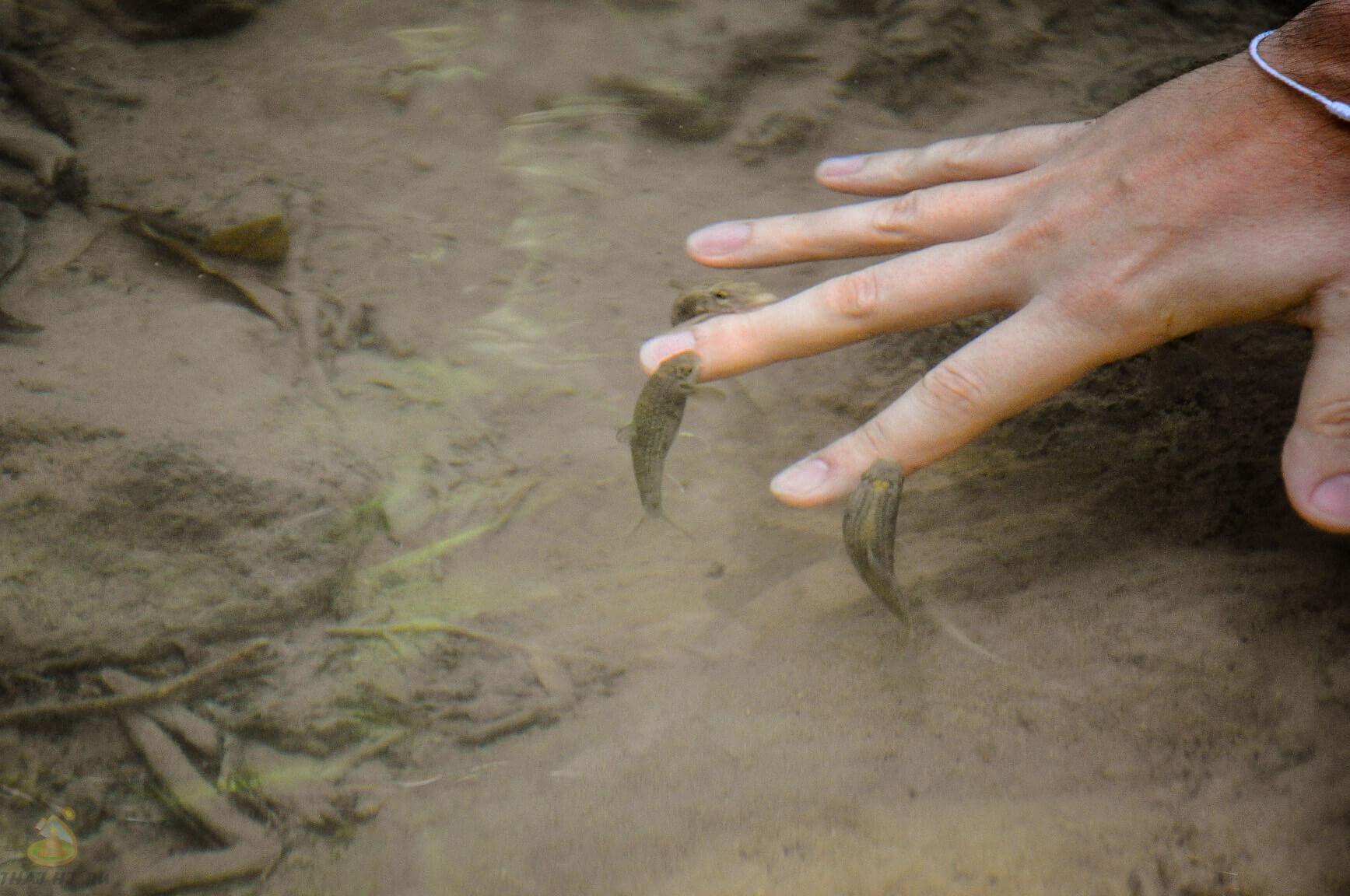 Пиллинговые рыбки в водоеме