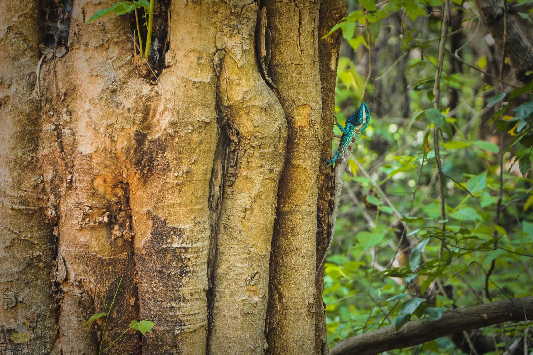 Геккон на дереве в Тайланде