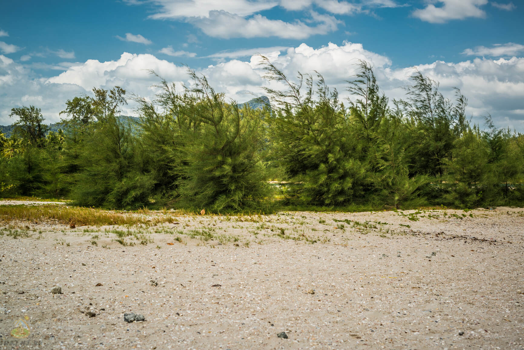 Растения на пляже Noopharat Thara Beach