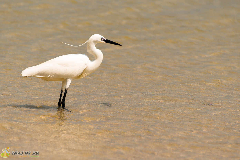 Птицы на море в Хуахине