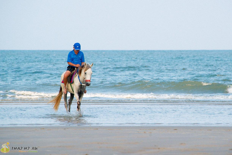 Лошади на пляже Хуахина