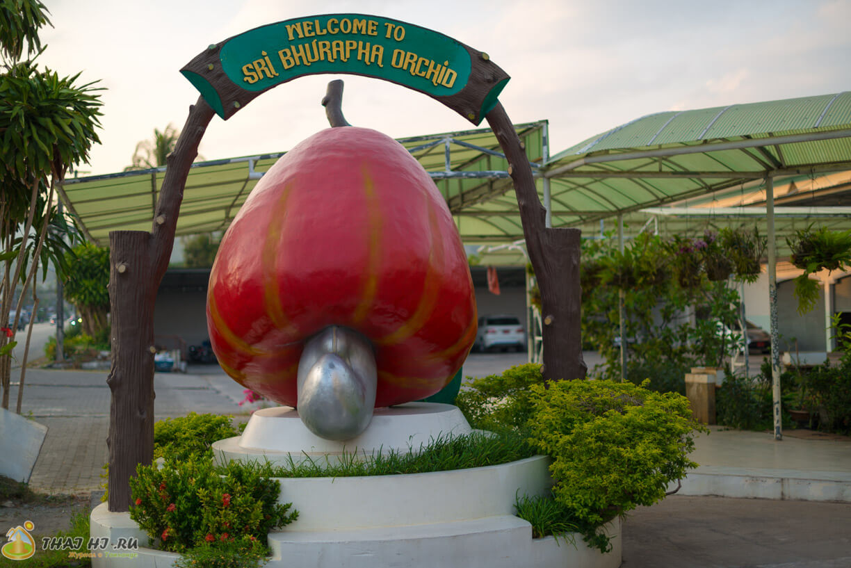 Фабрика кешью Пхукет, Таиланд