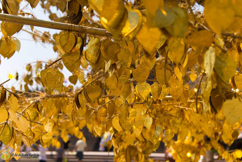 Золотое дерево