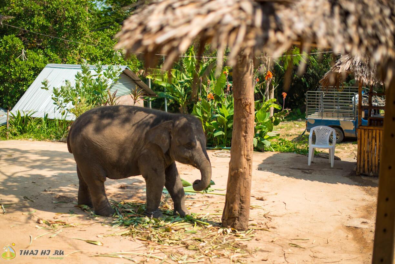 Слоник на Пхукете