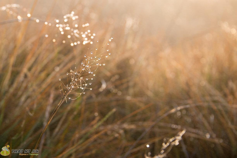Огромные капли росы на траве