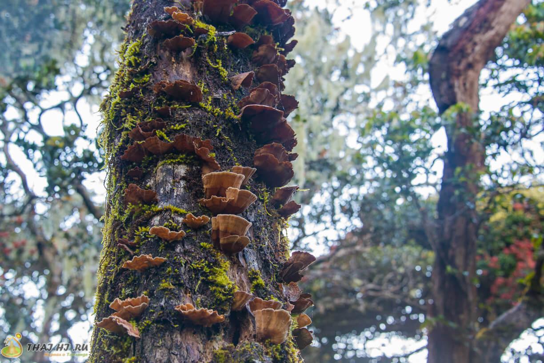 Грибы на деревьях в Хортон Плейнс