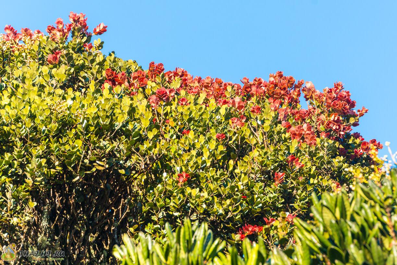 Цветы в Horton Plains