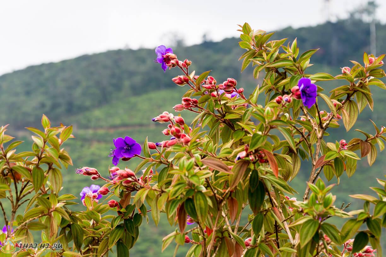 Цветы на Шри-Ланке