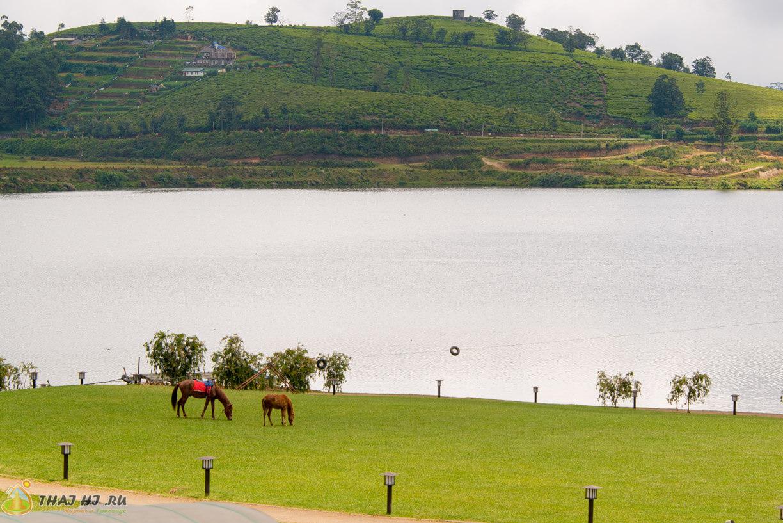Лошади в Нувара-Элии