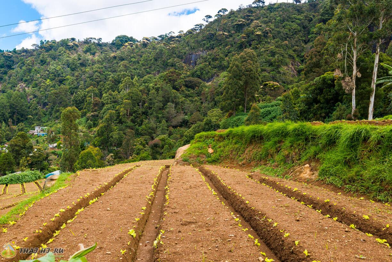 Земледелие в Нувара-Элии