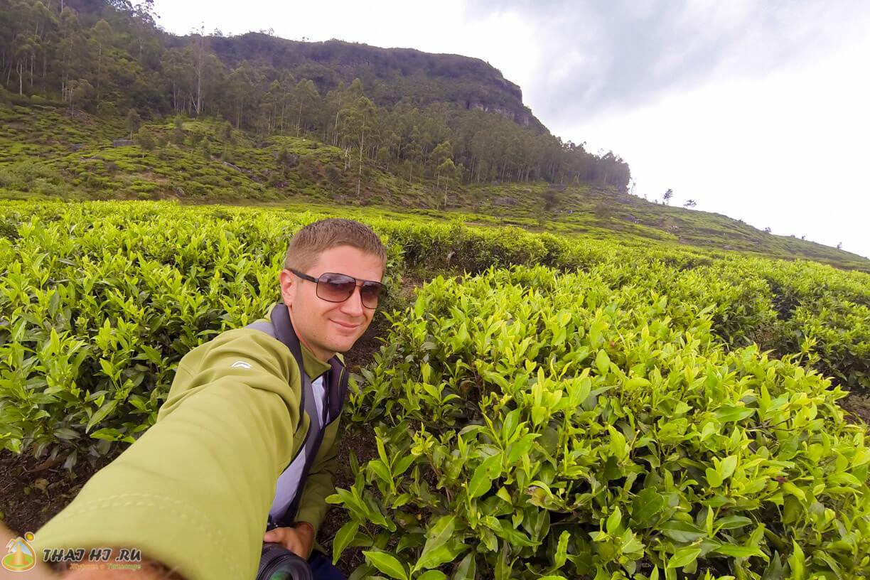Плантации чая - фото в Нувара-Элии