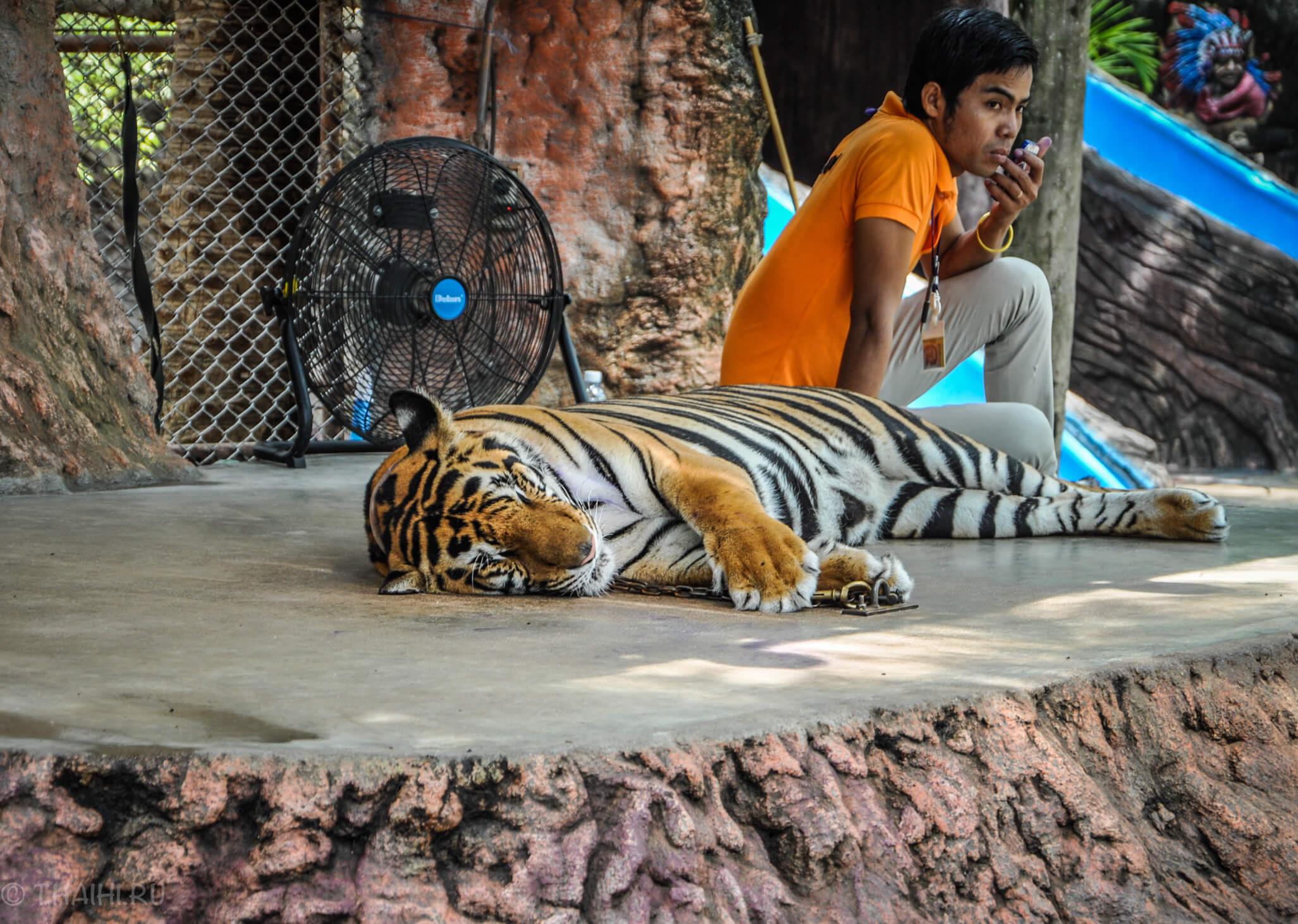 Фото с тигром в парке Nong Nooch