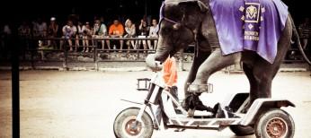 Слоны на велосипедах в паркет Нонг Нуч