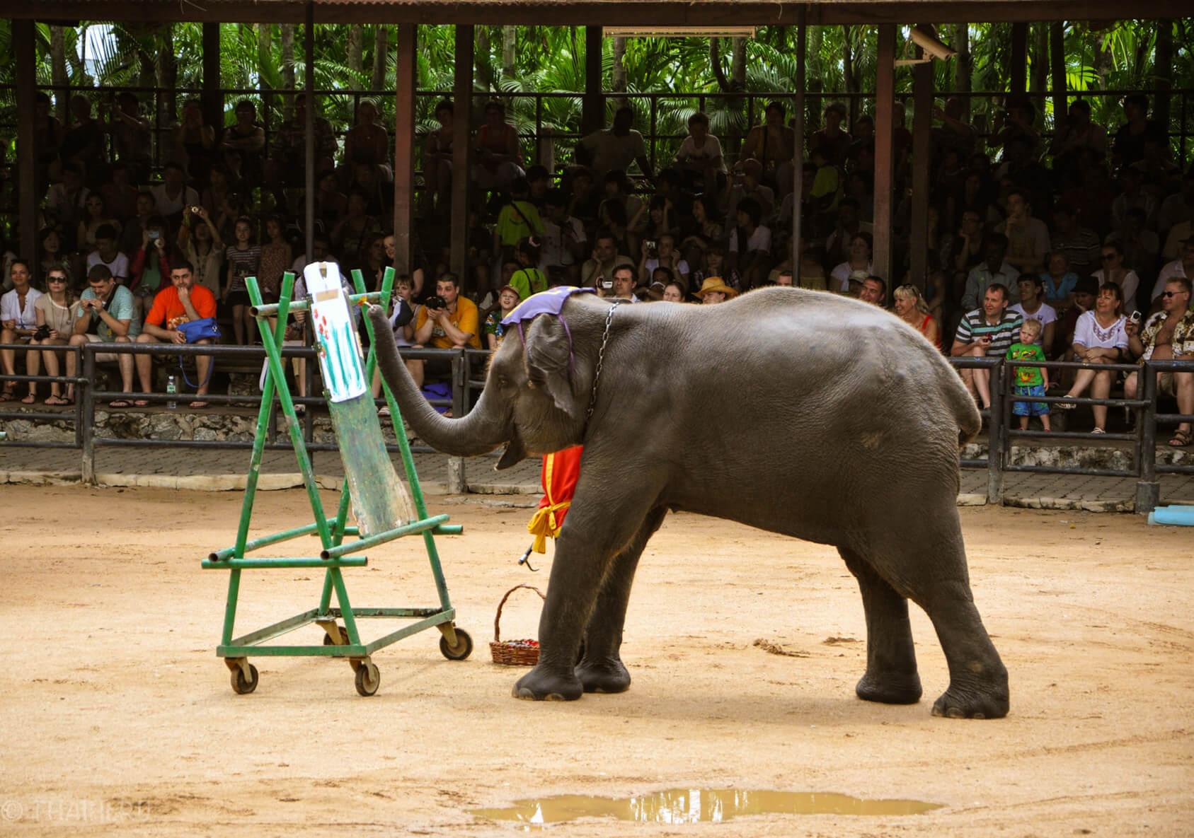 Слоны рисуют на футболке
