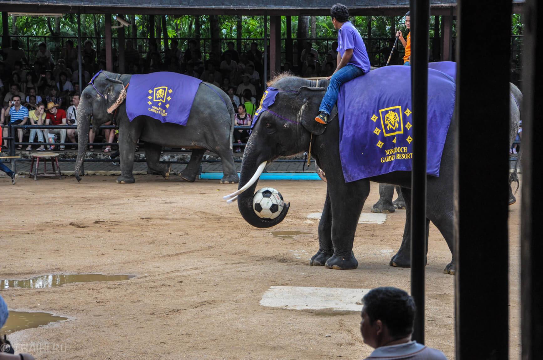 Слоны играют в футбол (Нонг Нуч)