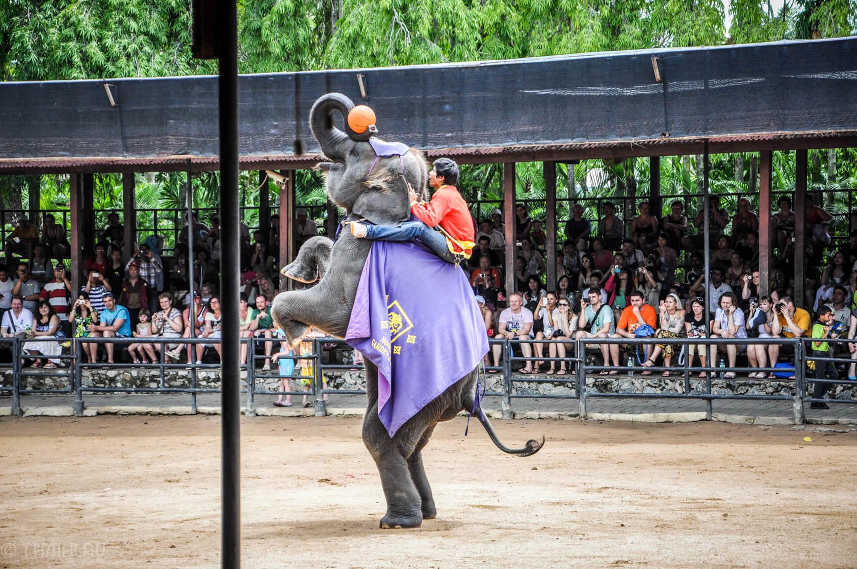 Слоники играют в баскетбол