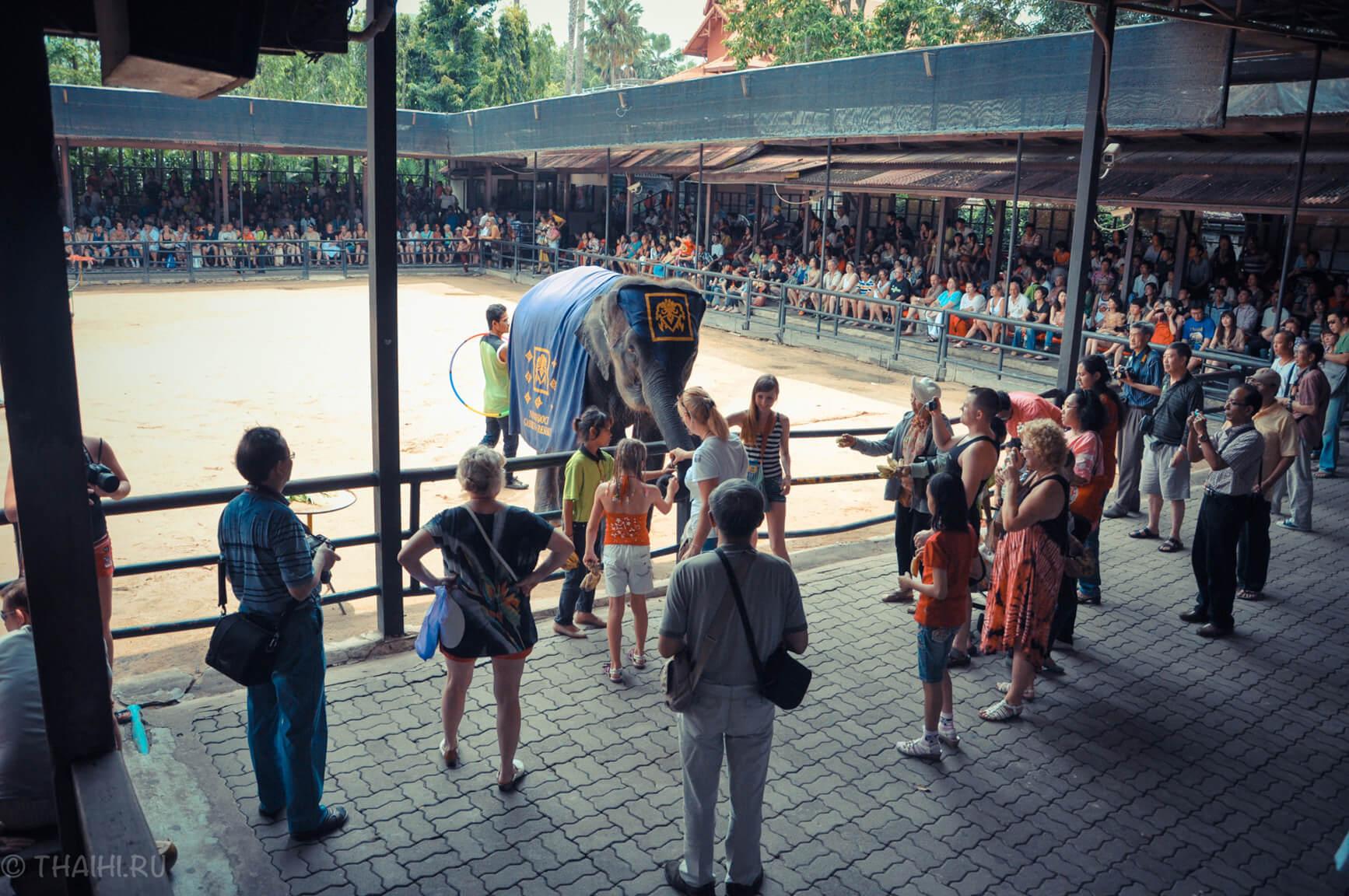 Фото - как кормить слона