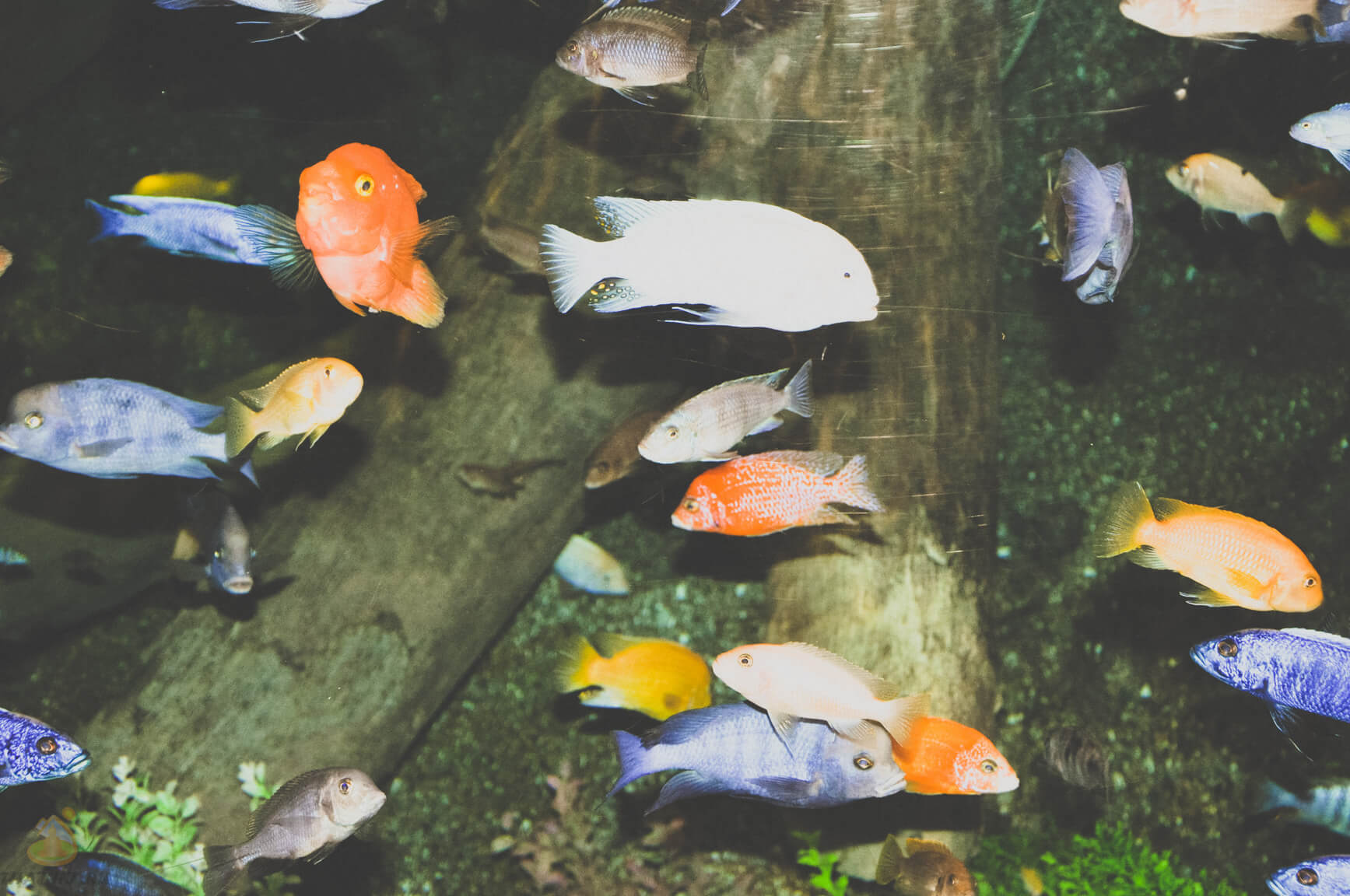 Рыбки в Siam Ocean World
