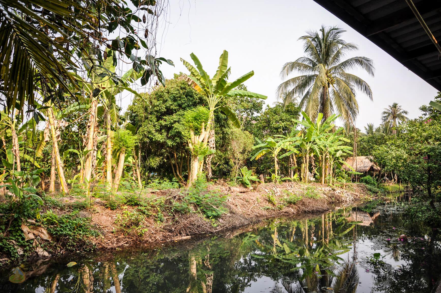 Кокосы и пальмы у фермера на Квай