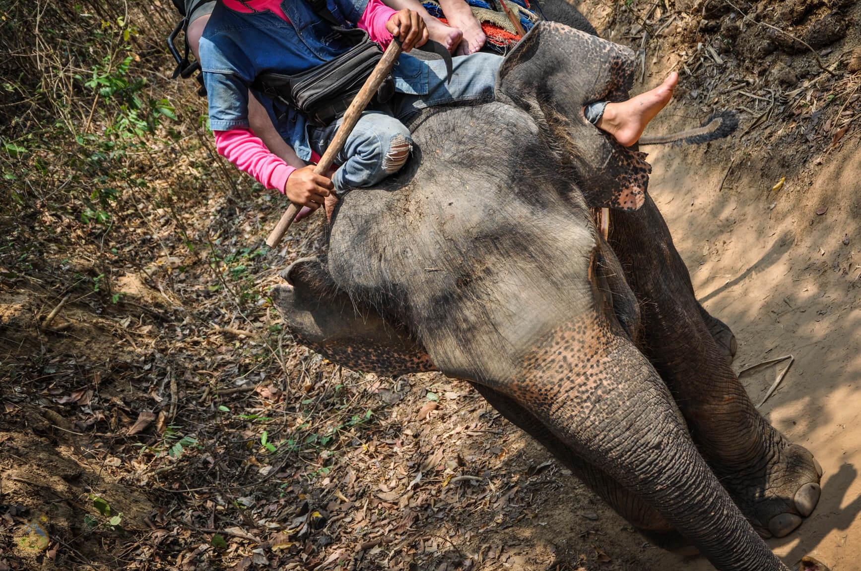 Это слон!