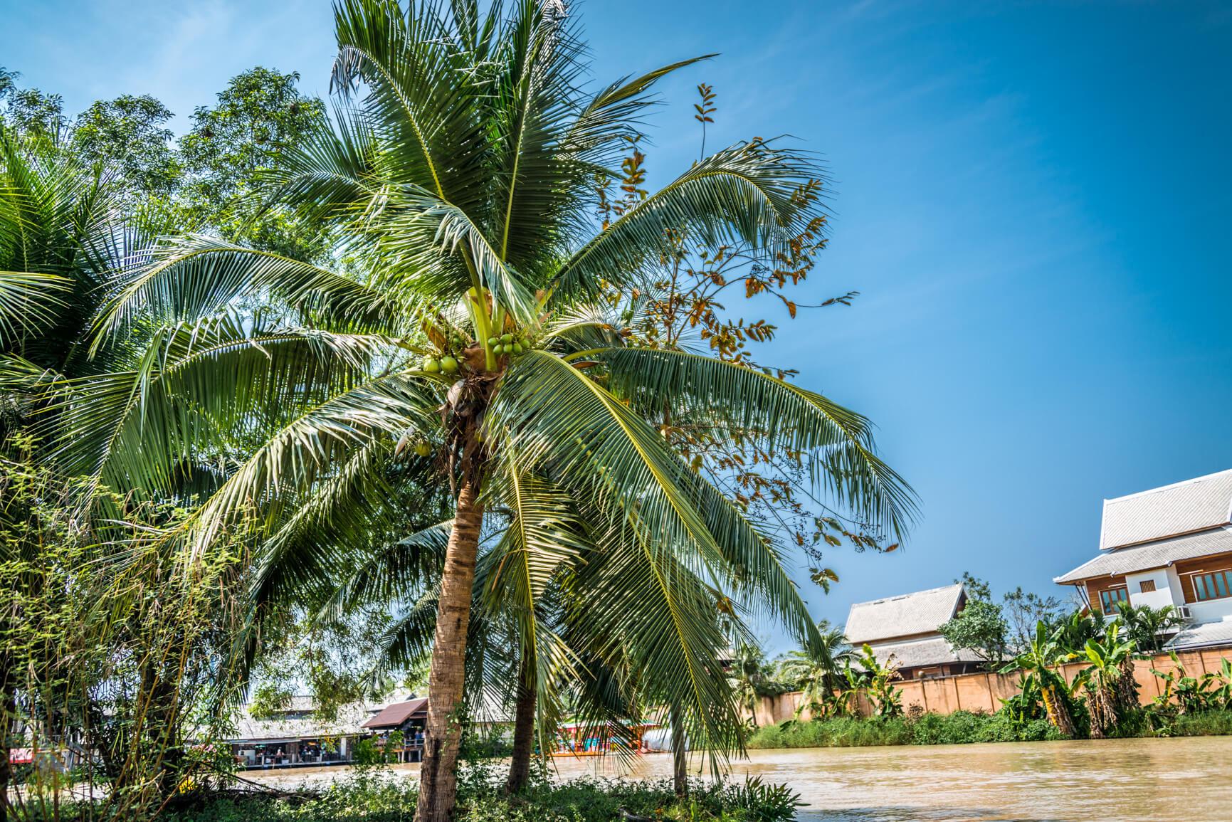 Пальма и остров посреди рынка