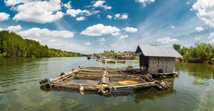 Красоты на рыбной ферме