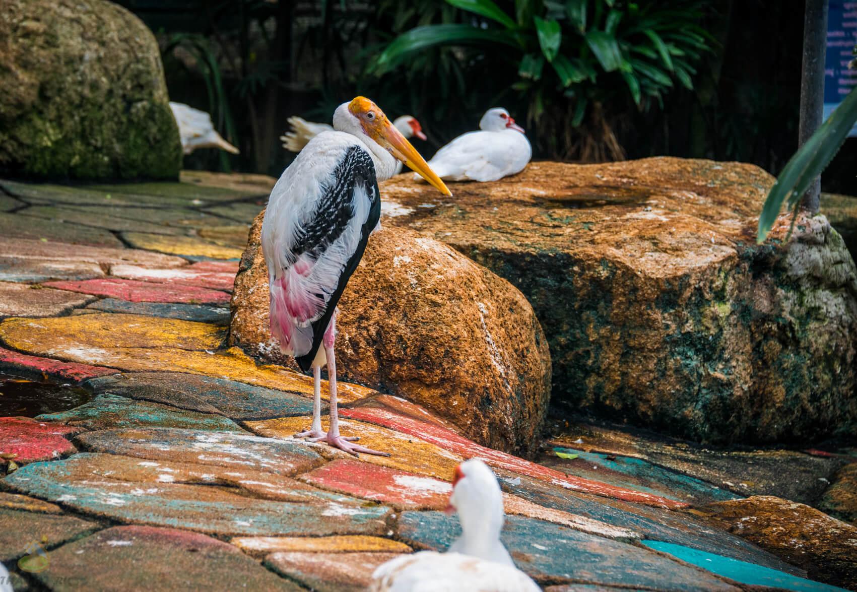 Большие птицы в парке Nong Nooch
