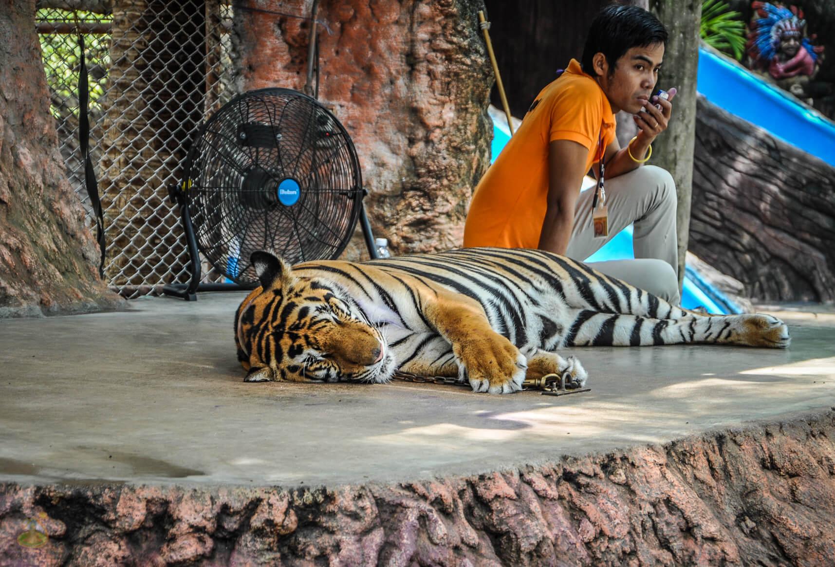 Уставший тигр в парке Nong Nooch
