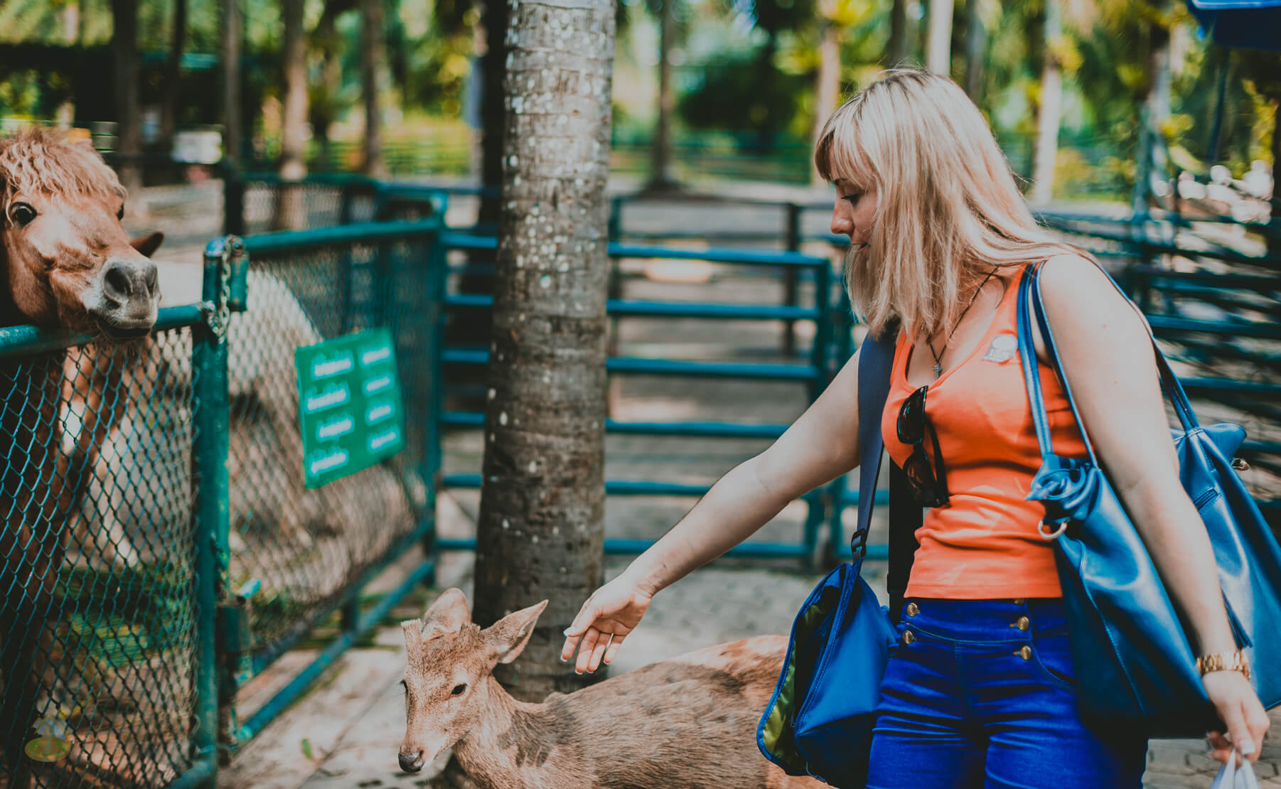 Олени и лошади в парке