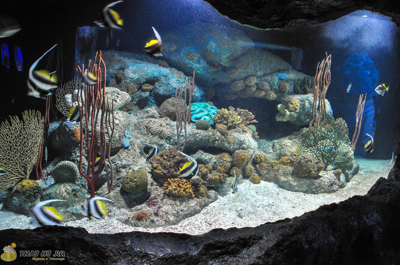 Пхукет - океанариум