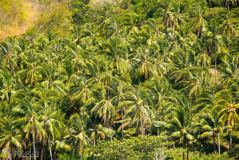 Пальмы на Най Харне
