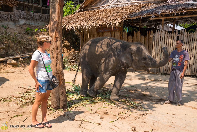 Кормление слонов в Таиланде, Пхукет