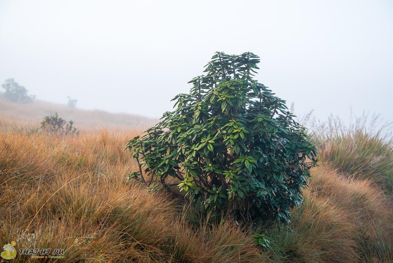 Хортон Плейнс - растительность