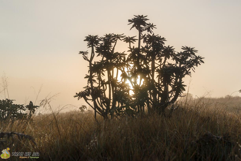 Растения в Horton Plains