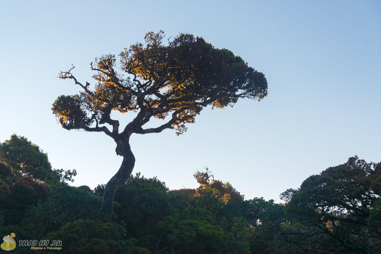 Деревья в Horton Plains